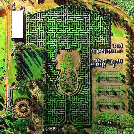 Pineapple Garden Maze, Hawaii in a birds-eye view. Posted by website Daily Overview