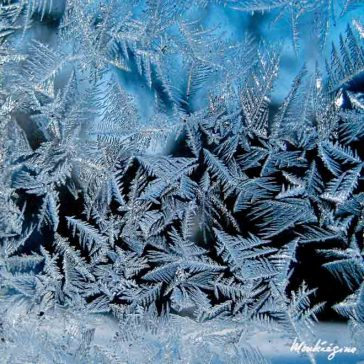 Frosted window with fractal patterns